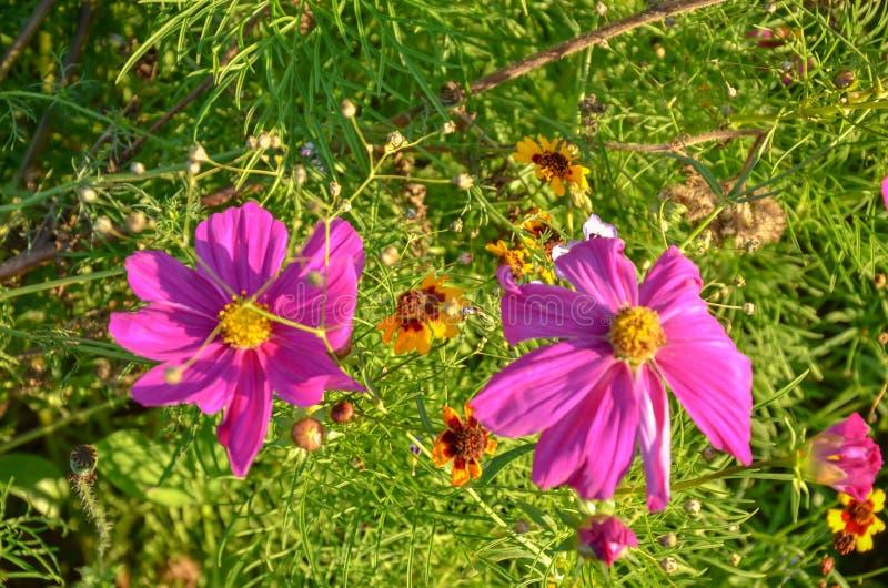 Trädgård med många rosa blommor och gröna sidor arkivbild