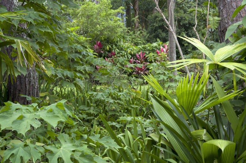 Trädgård med och tropiska växter och blommor arkivfoto