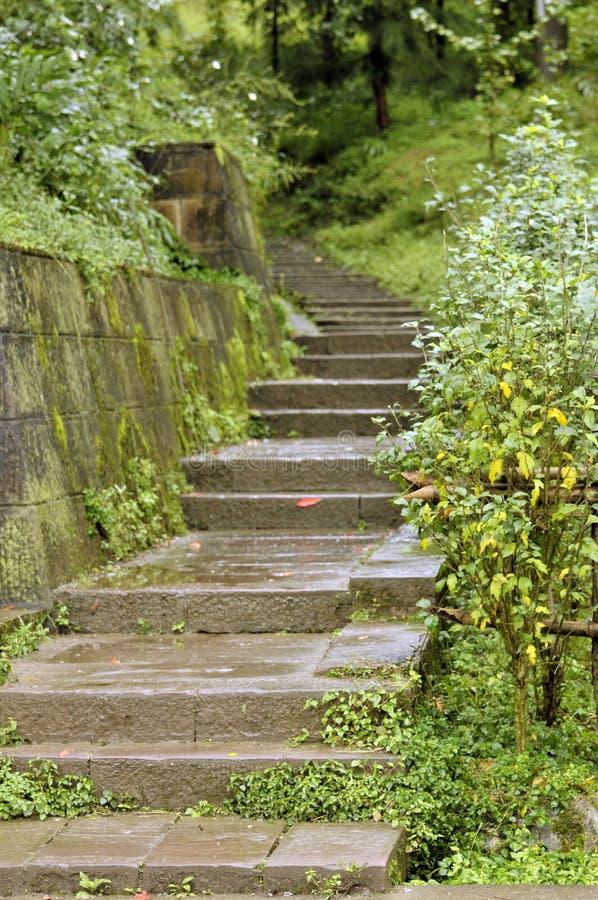 Trädgård med trappa royaltyfri fotografi