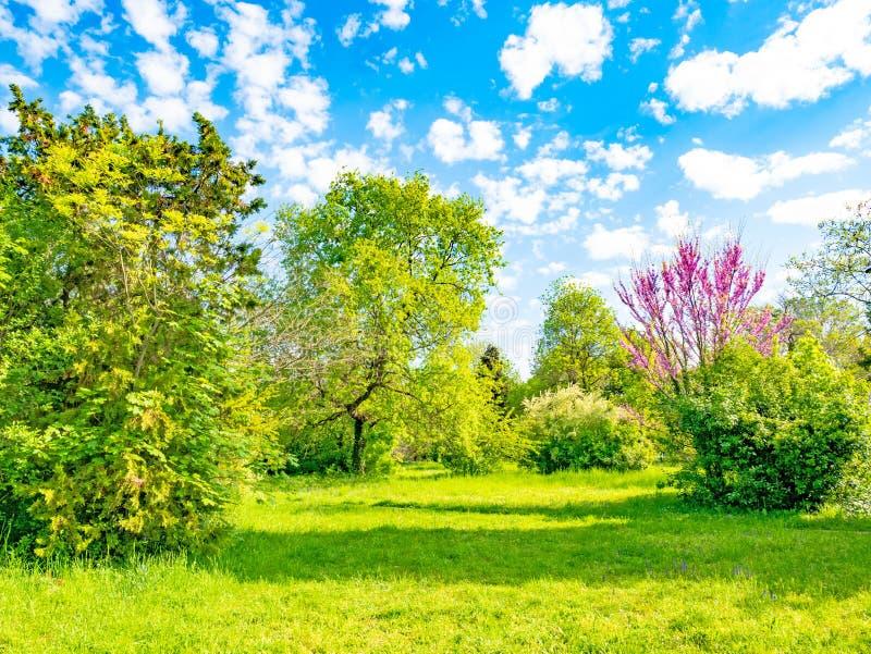 Trädgård och trädgård med träd, grönt gräs på gräsmatta och blå himmel med vita moln arkivbilder