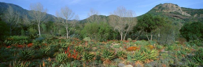 Trädgård på mitten för jordbekymmer, Ojai, Kalifornien royaltyfri fotografi