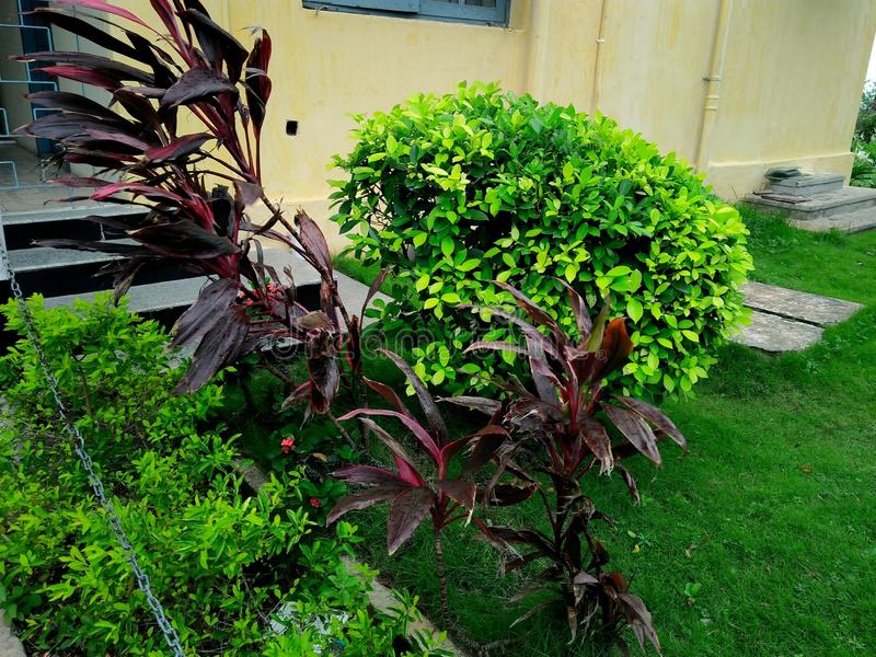 Trädgård på näsan royaltyfri bild