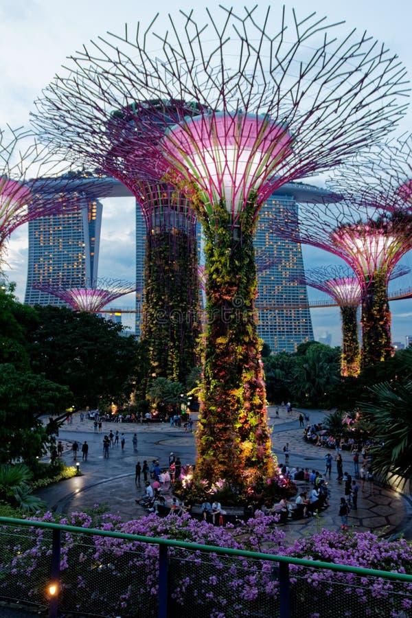 Trädgård vid fjärdljusshowen, Singapore arkivfoton
