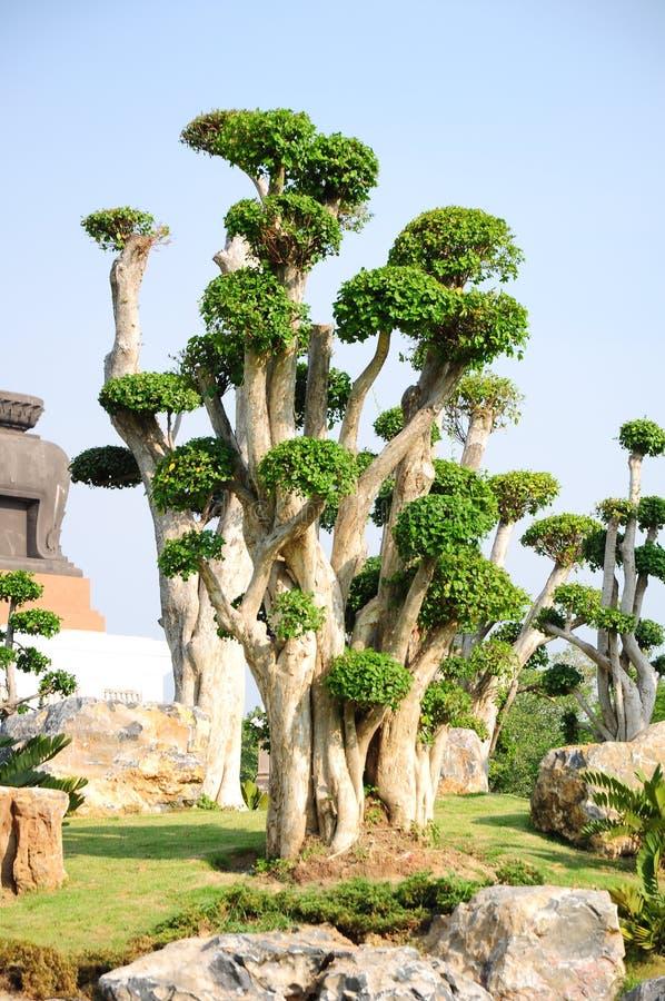 Trädgårdar arkivfoton