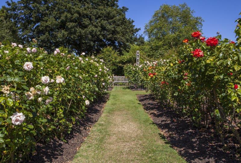 Trädgårdar för drottning Marys i regenter parkerar, London royaltyfria foton