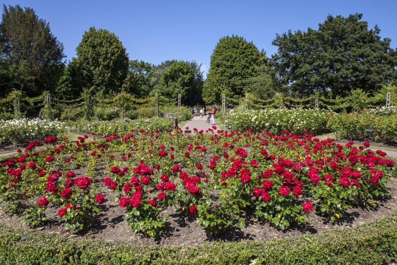 Trädgårdar för drottning Marys i regenter parkerar, London royaltyfri foto