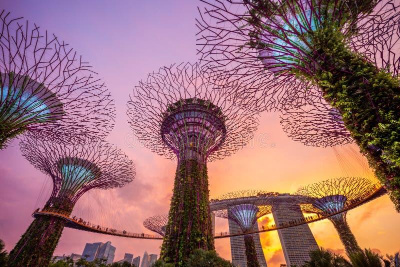 Trädgårdar vid fjärden med supertree i singapore royaltyfri fotografi