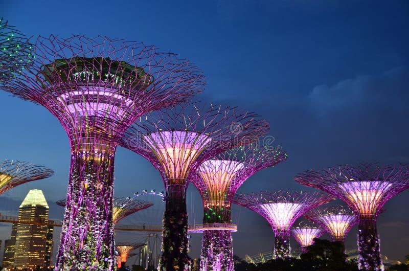 Trädgårdar vid fjärden, Singapore lopp fotografering för bildbyråer