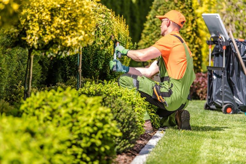 Trädgårdarbetare som klipper växter royaltyfri bild