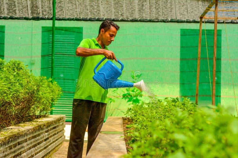 Trädgårdarbetaren i likformign som bevattnar växter som använder vatten kan arkivbild