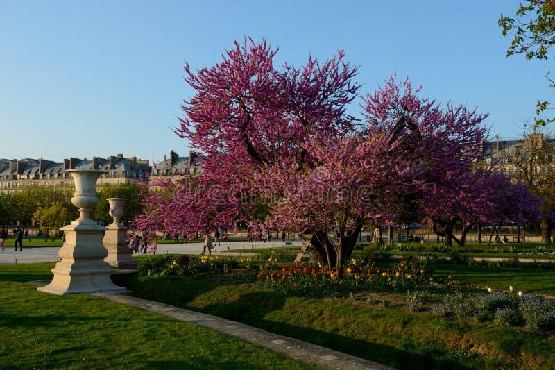 Trädgårdarna av Tuileries i Paris royaltyfri foto
