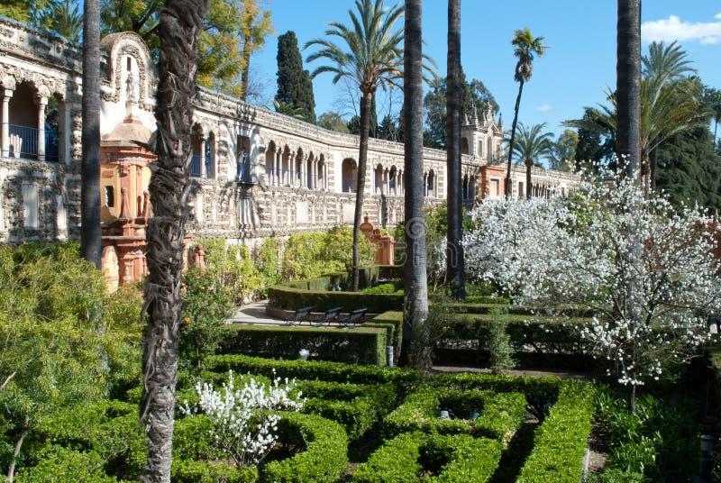 Trädgårdarna för vit blomma av den verkliga alcazaren av Seville royaltyfri foto