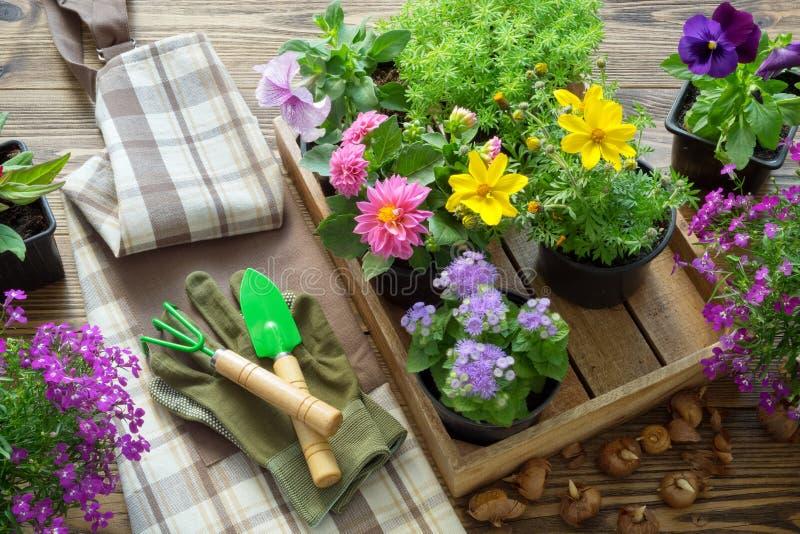 Trädgårdblommor och växter i blomkrukor Att bevattna kan, skyffeln, att kratta, handskar och förklädet Top beskådar arkivbilder