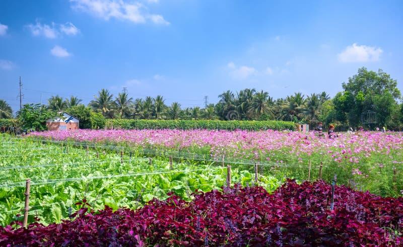 Trädgården blommar ekologi med många färgrika blommor för att tilldra mer turister, fotografier reser royaltyfri bild
