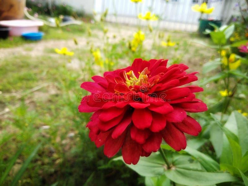 Trädgården blommar i natur arkivfoto