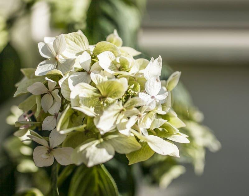 Trädgården - en closeup av en grupp av bleka blommor arkivbild