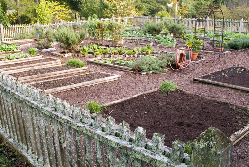 trädgården konspirerar grönsaken royaltyfri fotografi