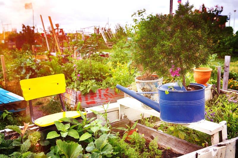 Trädgården med gammalt bevattna kan och färgrika vildblommor arkivfoto