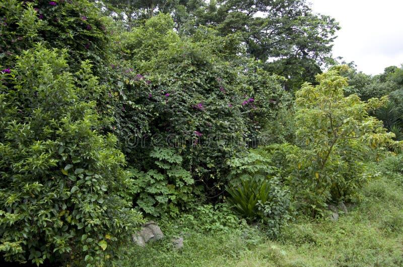 Trädgården med vaggar och tropiska växter och blommor arkivfoto