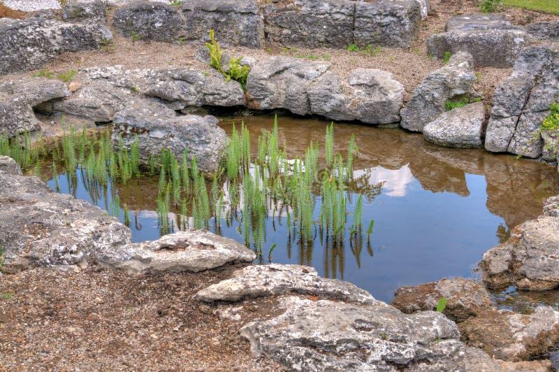 trädgården planterar damm royaltyfria foton