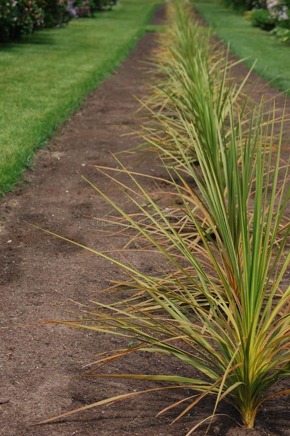 trädgården planterar spiny arkivfoton