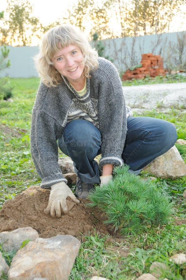 trädgården planterar treeskvinnan royaltyfri fotografi