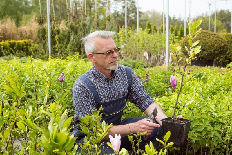 Trädgårdlagerchef som rymmer en blomma i en kruka arkivfoto