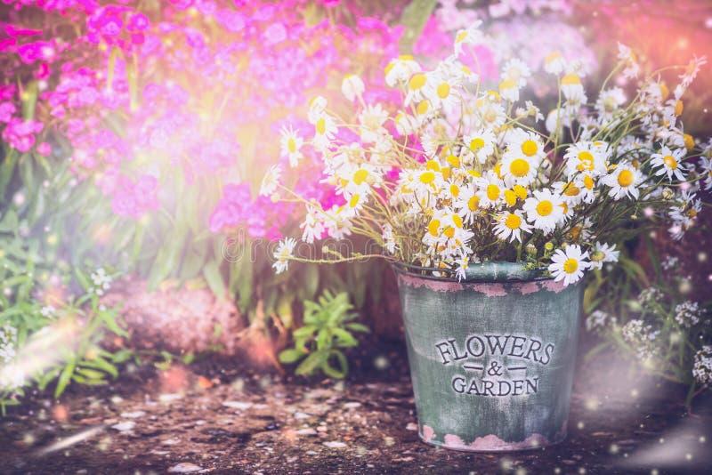 trädgårds- älskvärt Blomsterrabatten i sommarträdgård med hinken och tusenskönor samlar ihop arbeta i trädgården bakgrund som är  arkivbild