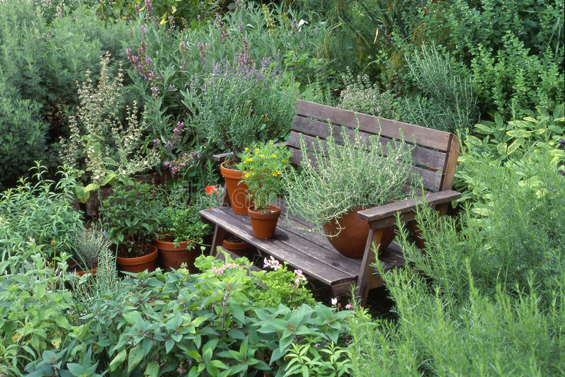 trädgårds- örtar royaltyfri fotografi