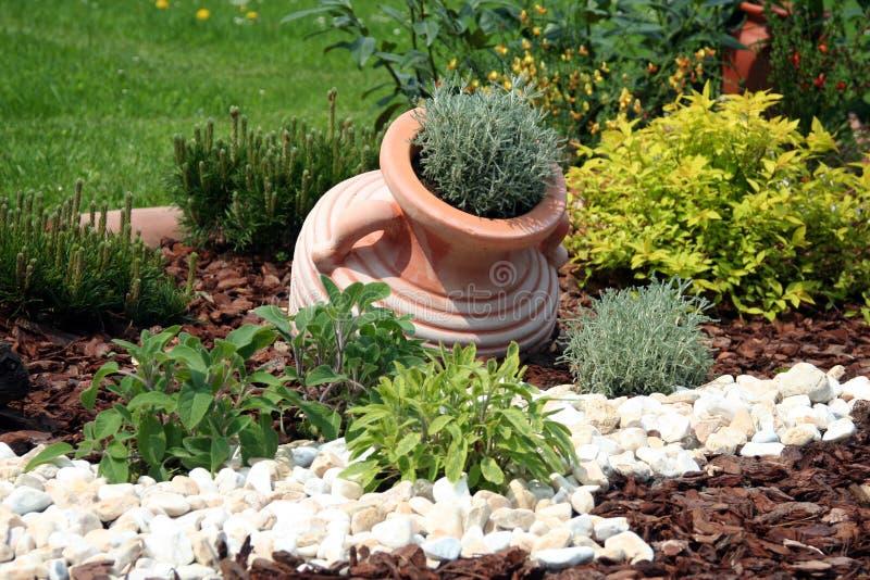 trädgårds- örtar arkivfoton