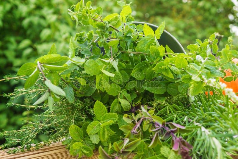 Trädgårds- örter, medicinalväxter arkivfoton