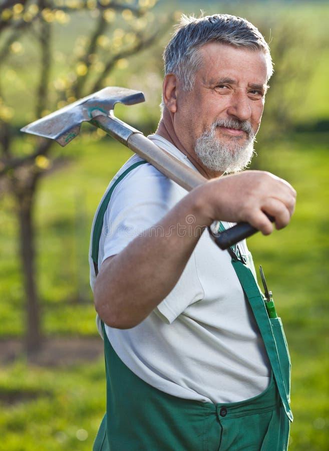 trädgårds- arbeta i trädgården hans manpensionär royaltyfria bilder