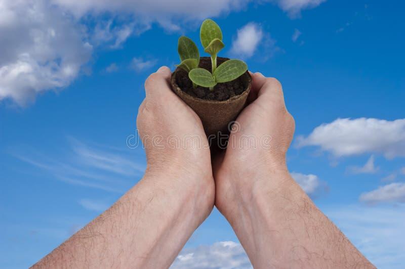 Trädgårds- Arbeta I Trädgården Växer Växande Plantera För Växt Arkivfoto