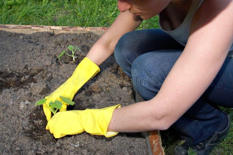 trädgårds- arbete arkivbild