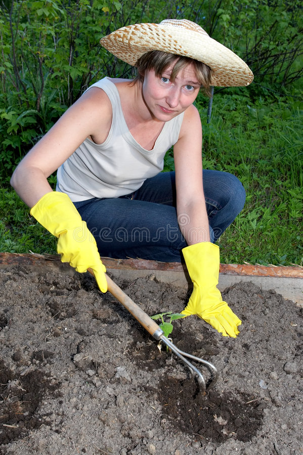 trädgårds- arbete royaltyfria foton