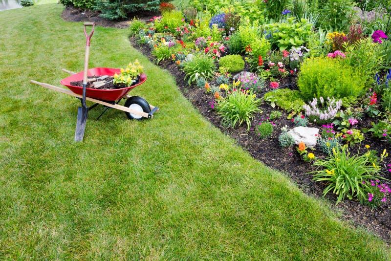 Trädgårds- arbete som göras transplantera celosia fotografering för bildbyråer