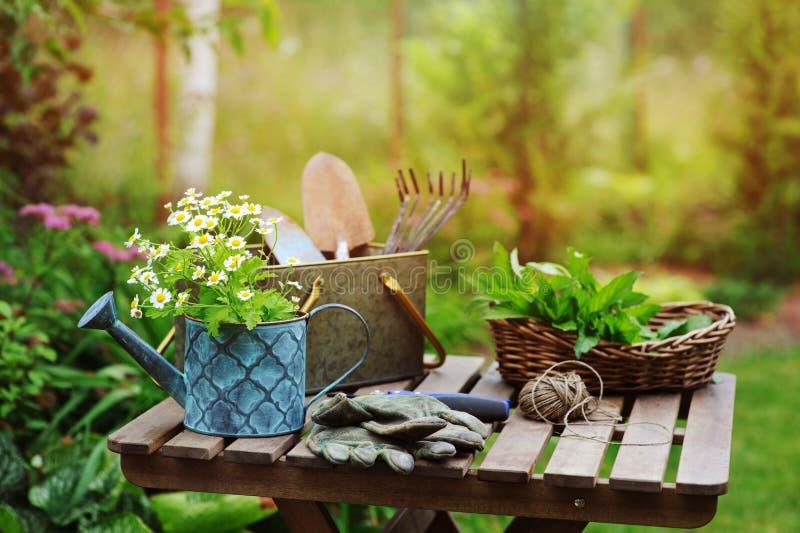 Trädgårds- arbetsstilleben i sommar Kamomillblommor, handskar och hjälpmedel på den utomhus- trätabellen arkivfoton