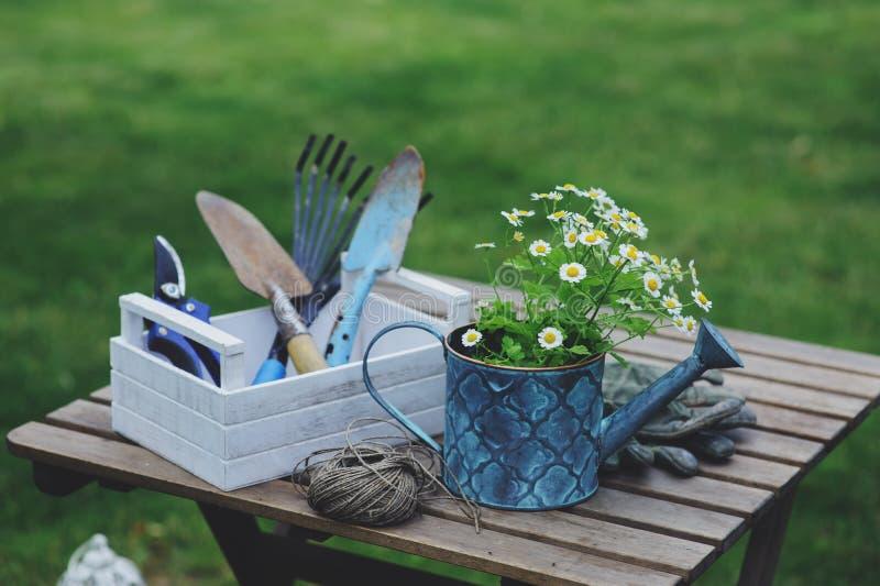 Trädgårds- arbetsstilleben i sommar Kamomillblommor, handskar och hjälpmedel på den utomhus- trätabellen royaltyfria bilder