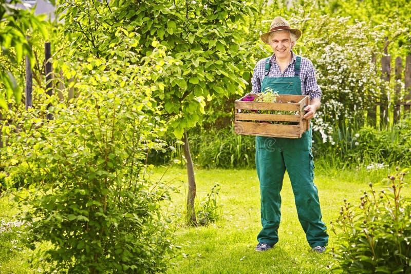 Trädgårds- bärande växter för ask för trädgårdsmästare för sugrörhatt royaltyfri bild