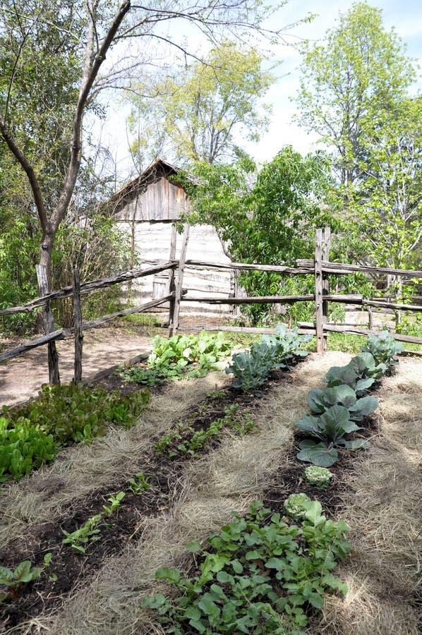 trädgårds- banbrytande grönsak royaltyfri fotografi