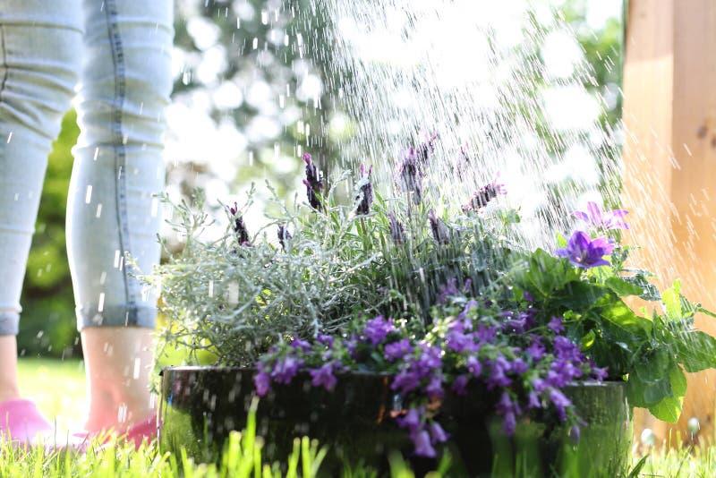 trädgårds- bevattna arkivfoto