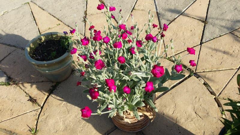 Trädgårds- blomma royaltyfri bild
