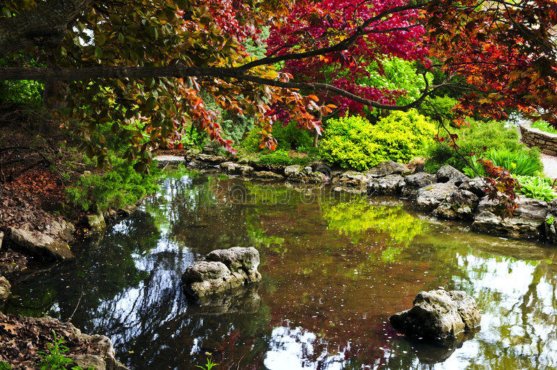 trädgårds- dammzen arkivbild
