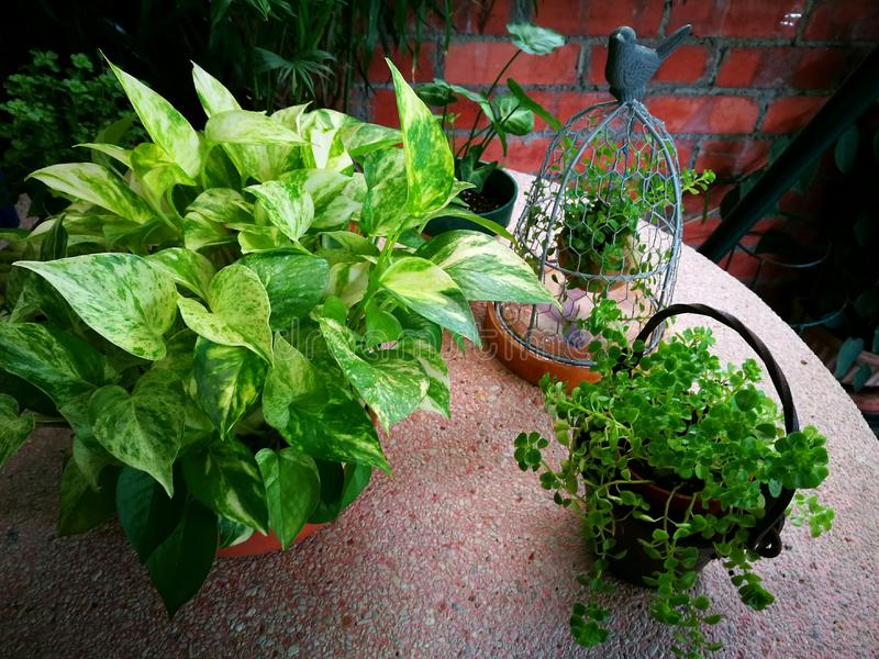 Trädgårds- dekorobjekt med gröna växter royaltyfri bild