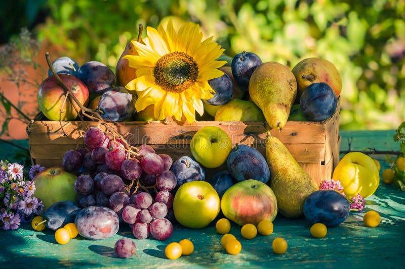 Trädgårds- för fruktkorg för sen sommar säsongsbetonad sol för inställning för ljus royaltyfria bilder
