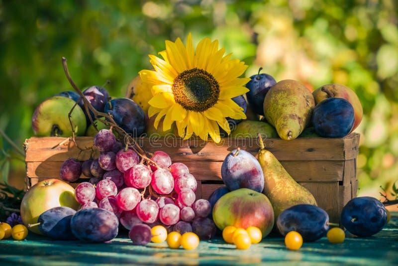 Trädgårds- för fruktkorg för sen sommar säsongsbetonad sol för inställning för ljus royaltyfri fotografi