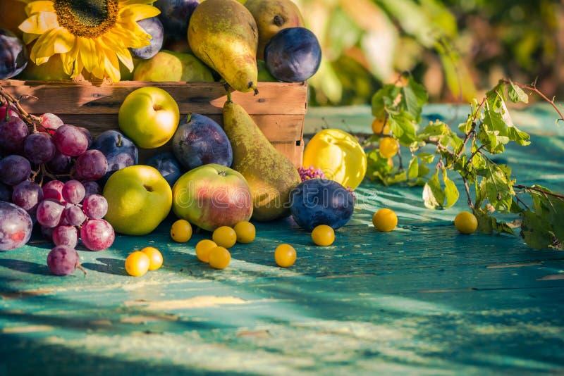 Trädgårds- för fruktkorg för sen sommar säsongsbetonad sol för inställning för ljus arkivbilder