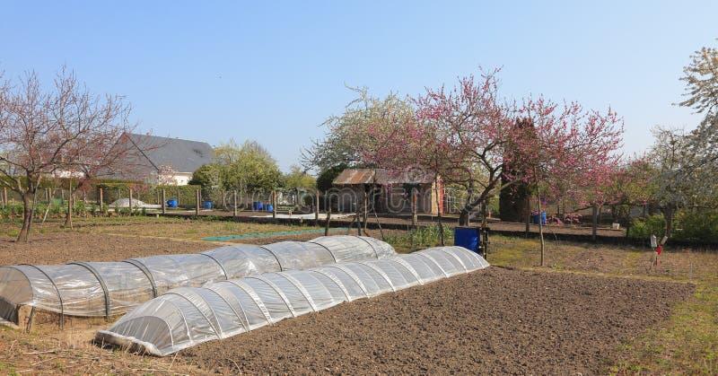 trädgårds- fjäder royaltyfri foto