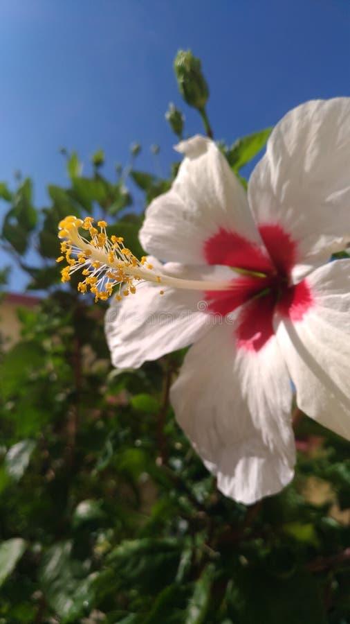Trädgårds- flora arkivbilder