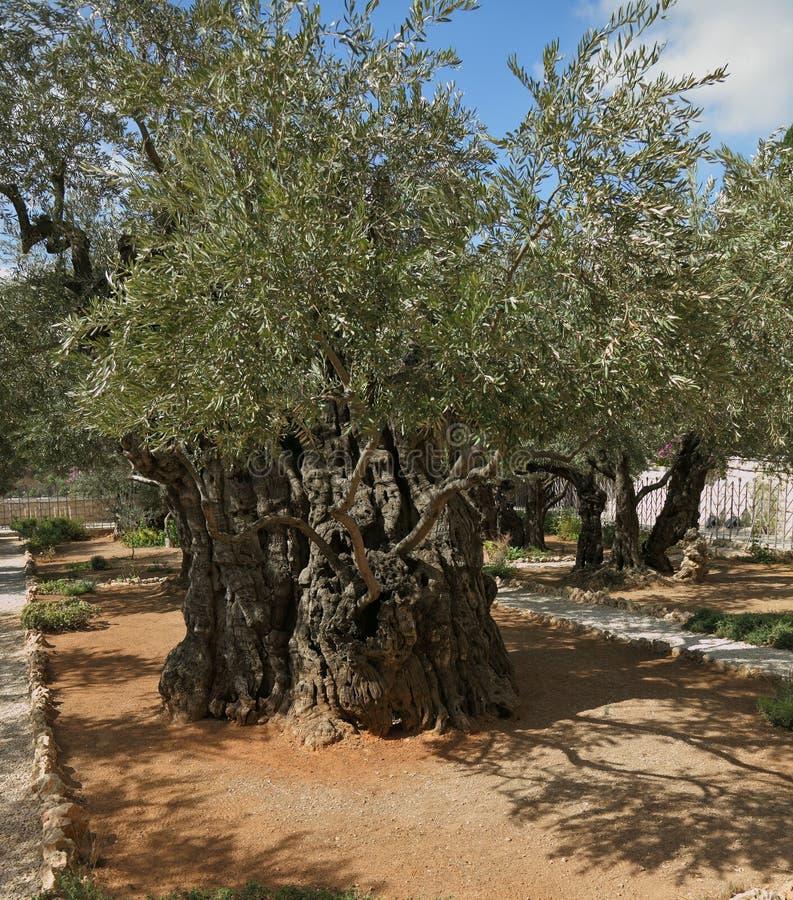 trädgårds- gethsemane royaltyfria foton